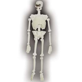 Esqueleto flúor