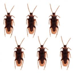 Paquete cucarachas