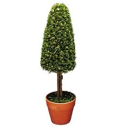 Árbol cono con maceta