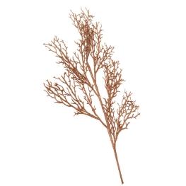 Rama coral